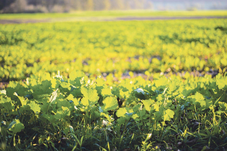 Pflanzen auf einem Feld. Thema: Verpackungsrecycling